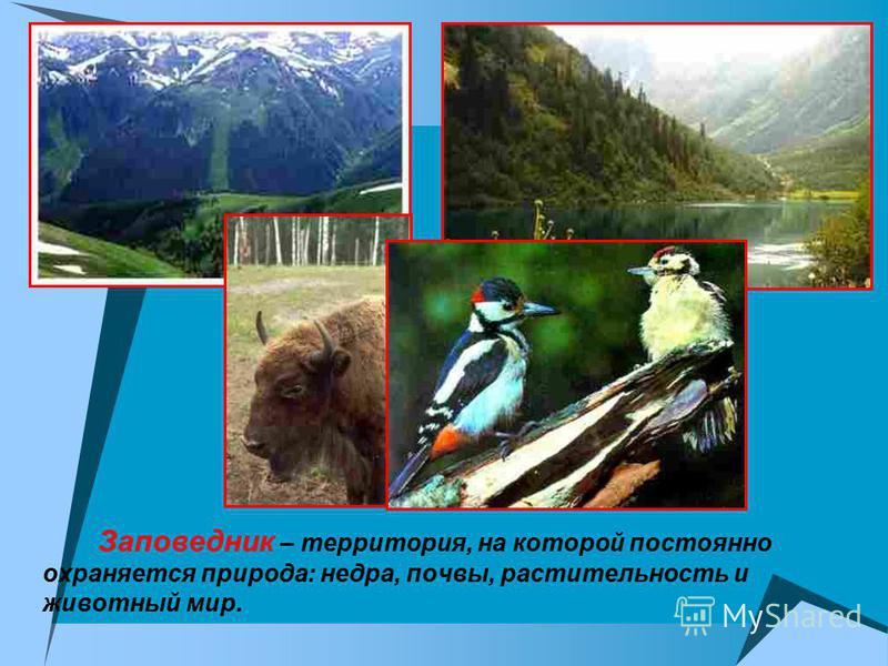 Заповедник – территория, на которой постоянно охраняется природа: недра, почвы, растительность и животный мир.