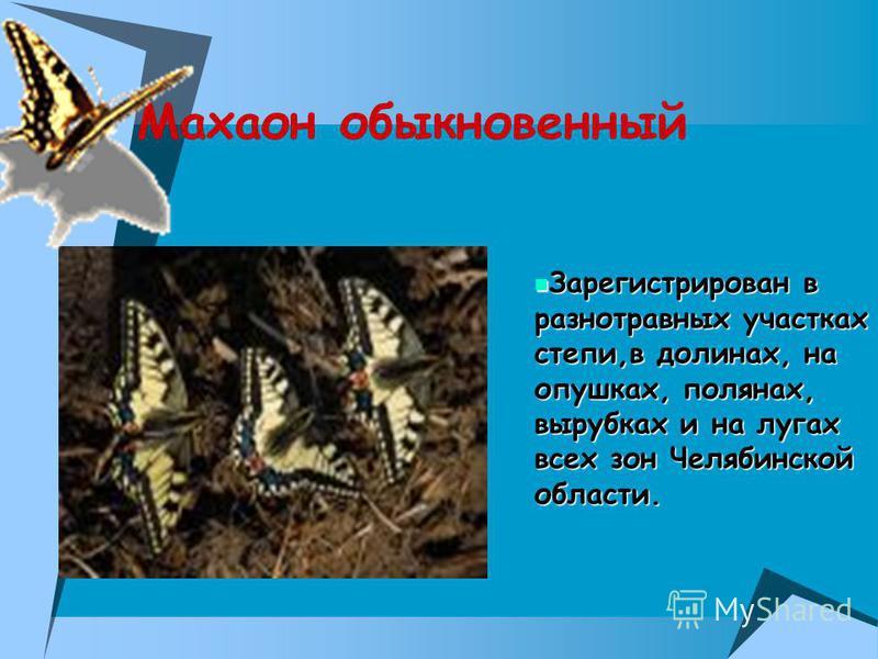 Махаон обыкновенный Зарегистрирован в разнотравных участках степи,в долинах, на опушках, полянах, вырубках и на лугах всех зон Челябинской области. Зарегистрирован в разнотравных участках степи,в долинах, на опушках, полянах, вырубках и на лугах всех