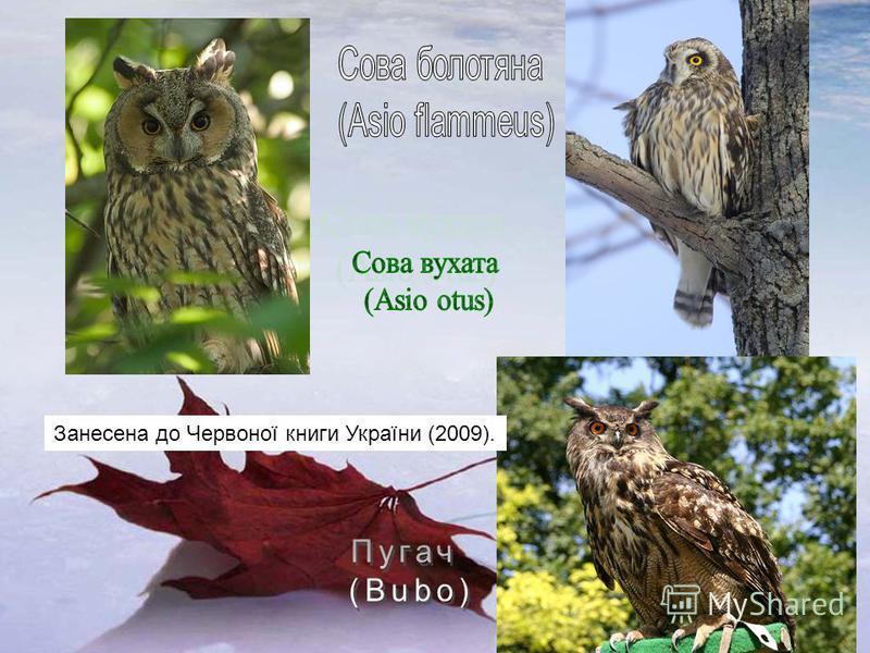 Занесена до Червоної книги України (2009).