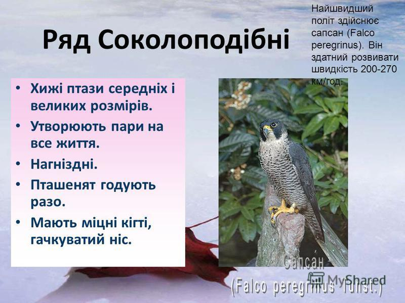 Хижі птази середніх і великих розмірів. Утворюють пари на все життя. Нагніздні. Пташенят годують разо. Мають міцні кігті, гачкуватий ніс. Найшвидший політ здійснює сапсан (Falco peregrinus). Він здатний розвивати швидкість 200-270 км/год.