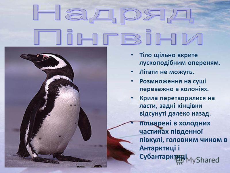 Тіло щільно вкрите лускоподібним опереням. Літати не можуть. Розмноження на суші переважно в колоніях. Крила перетворилися на ласти, задні кінцівки відсунуті далеко назад. поширені в холодних частинах південної півкулі, головним чином в Антарктиці і