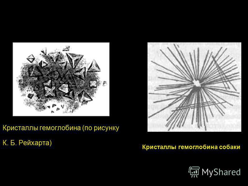 Кристаллы гемоглобина (по рисунку К. Б. Рейхарта) Кристаллы гемоглобина собаки