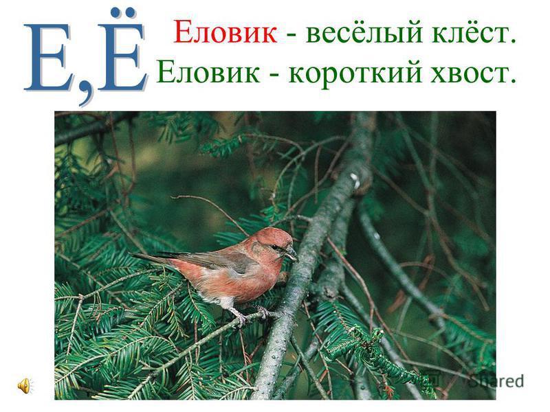 Дятел - врач лесного царства, Дятел лечит без лекарства.