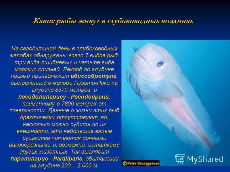 Какие рыбы живут в глубоководных впадинах На сегодняшний день в глубоководных желобах обнаружены всего 7 видов рыб: три вида ошибневых и четыре вида морских слизней. Рекорд по глубине поимки принадлежит абиссобротуле, выловленной в желобе Пуэрто-Рико