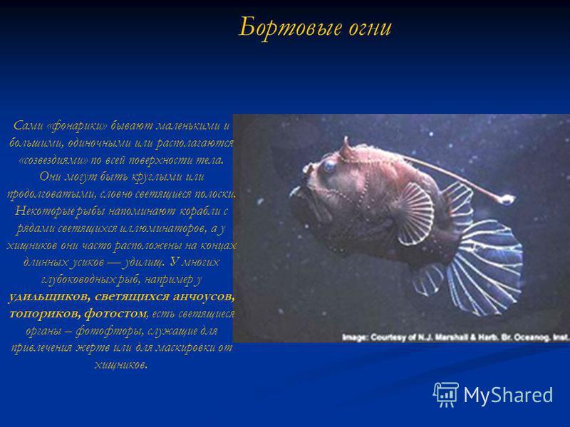 Бортовые огни Сами «фонарики» бывают маленькими и большими, одиночными или располагаются «созвездиями» по всей поверхности тела. Они могут быть круглыми или продолговатыми, словно светящиеся полоски. Некоторые рыбы напоминают корабли с рядами светящи