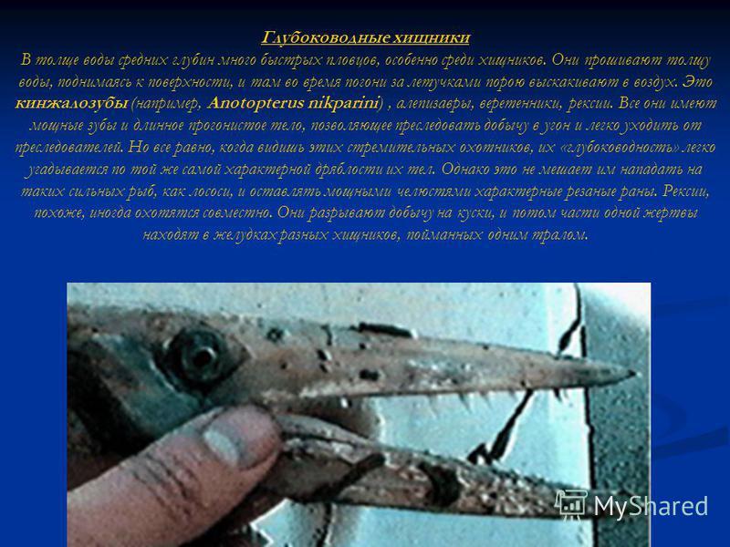 Глубоководные хищники В толще воды средних глубин много быстрых пловцов, особенно среди хищников. Они прошивают толщу воды, поднимаясь к поверхности, и там во время погони за летучками порою выскакивают в воздух. Это кинжалозубый (например, Anotopter