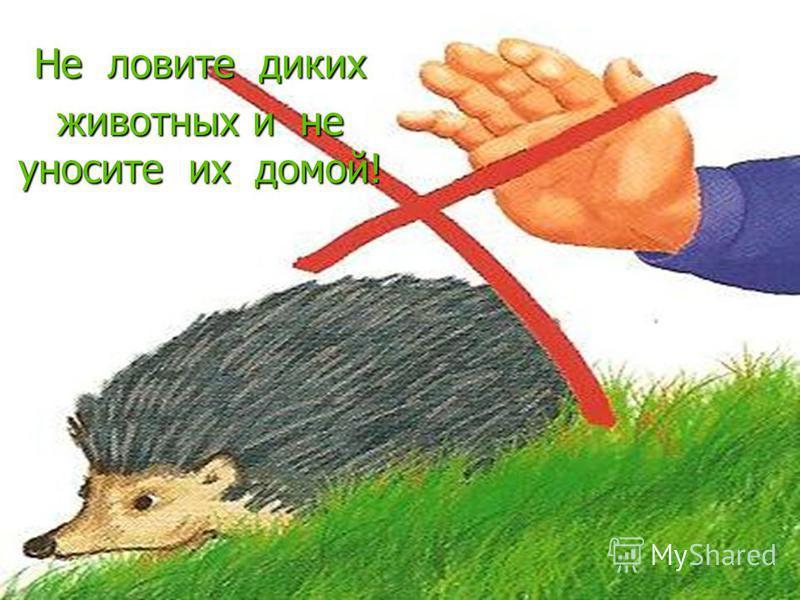 Не ловите диких животных и не уносите их домой!