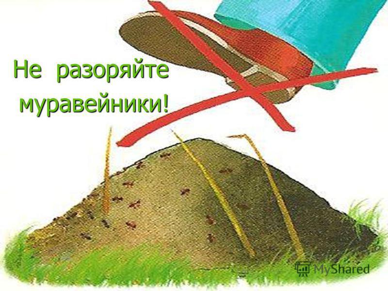Не разоряйте муравейники! муравейники!