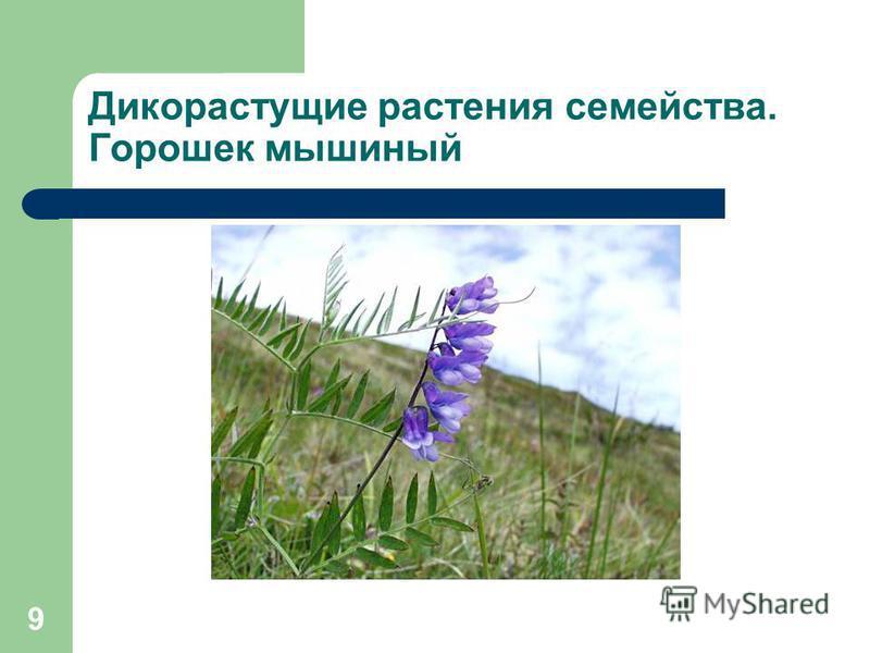 8 Диаграмма цветка растений семейства