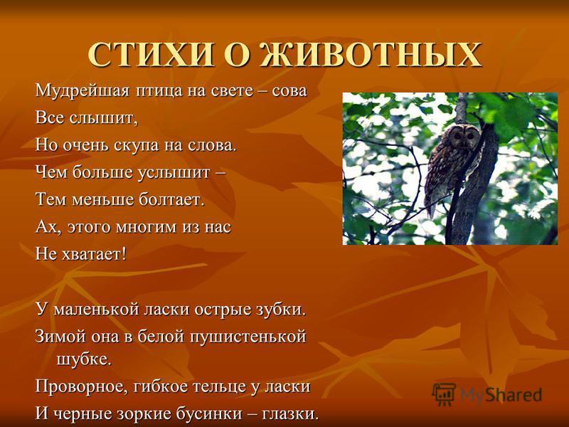 СТИХИ О ЖИВОТНЫХ Мудрейшая птица на свете – сова Все слышит, Но очень скупа на слова. Чем больше услышит – Тем меньше болтает. Ах, этого многим из нас Не хватает! У маленькой ласки острые зубки. Зимой она в белой пушистенькой шубке. Проворное, гибкое