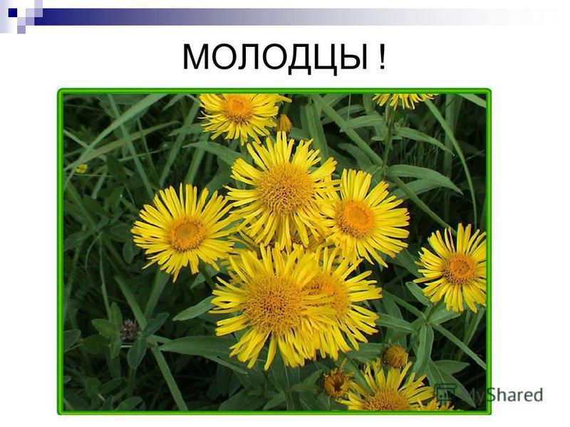 МОЛОДЦЫ ! П