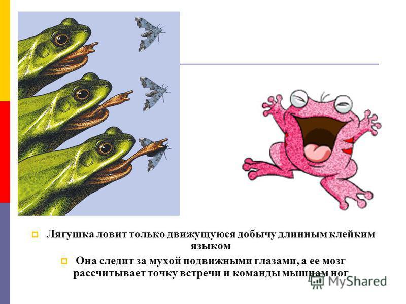 Лягушка ловит только движущуюся добычу длинным клейким языком Она следит за мухой подвижными глазами, а ее мозг рассчитывает точку встречи и команды мышцам ног