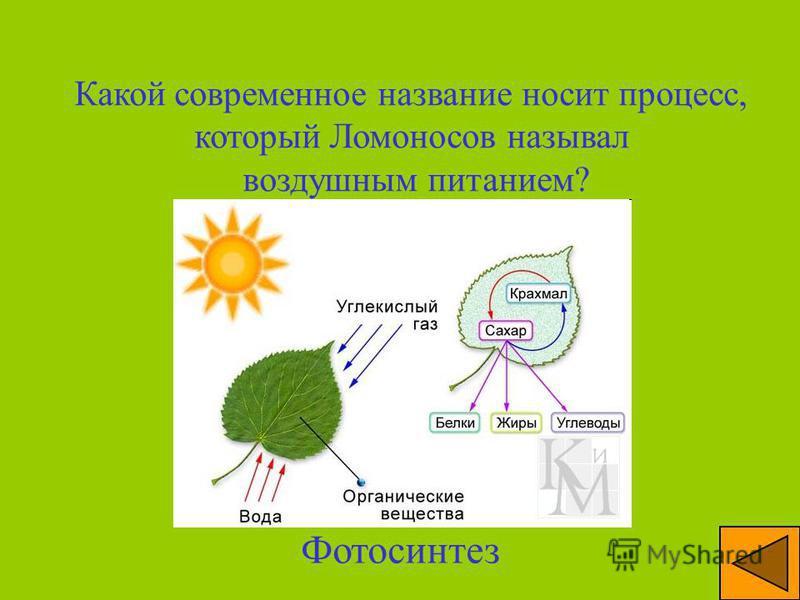 Какую науку М.В. Ломоносов считал «наукой наук»? Химия