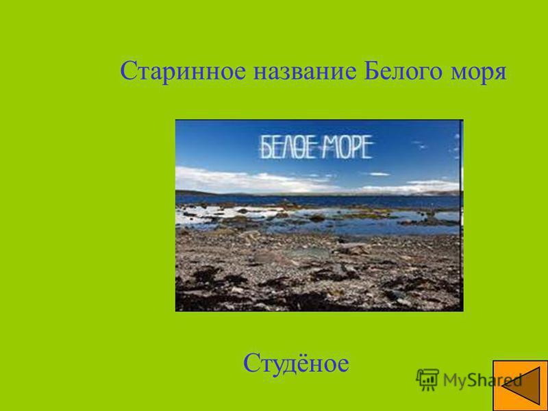 Море, в водах которого Занимался морским промыслом Ломоносов с отцом Белое море