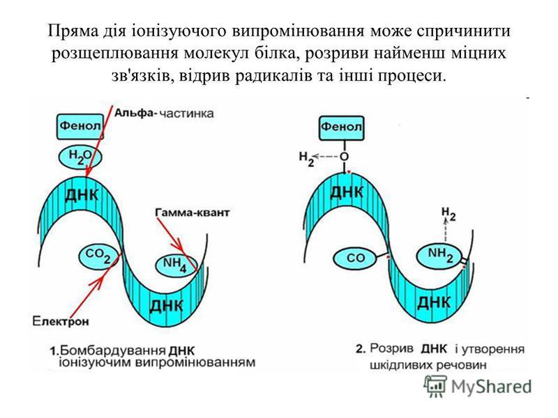 Пряма дія іонізуючого випромінювання може спричинити розщеплювання молекул білка, розриви найменш міцних зв'язків, відрив радикалів та інші процеси.