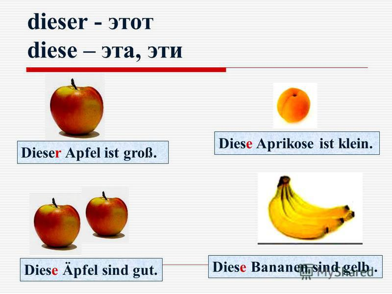 dieser - этот diese – эта, эти Dieser Apfel ist groß. Diese Aprikose ist klein. Diese Äpfel sind gut. Diese Bananen sind gelb.