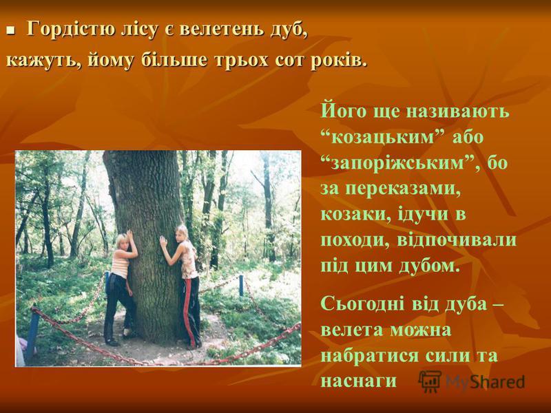 Гордістю лісу є велетень дуб, Гордістю лісу є велетень дуб, кажуть, йому більше трьох сот років. Його ще називають козацьким або запоріжським, бо за переказами, козаки, ідучи в походи, відпочивали під цим дубом. Сьогодні від дуба – велета можна набра