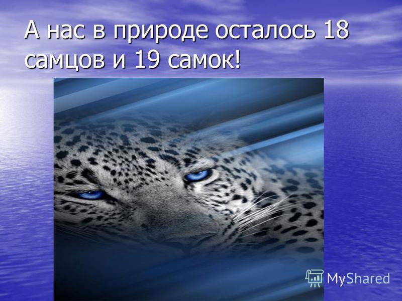 А нас в природе осталось 18 самцов и 19 самок!