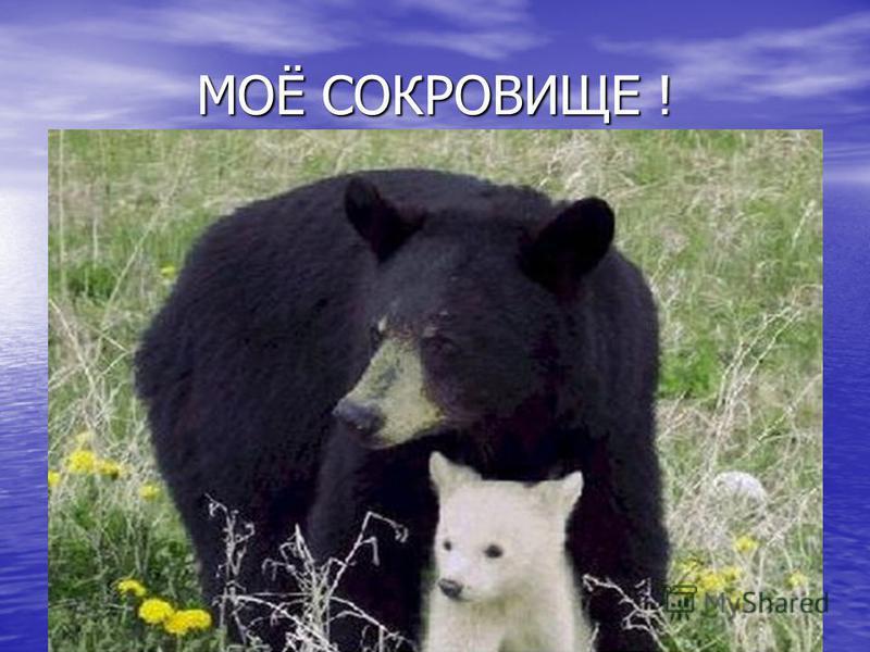 МОЁ СОКРОВИЩЕ !