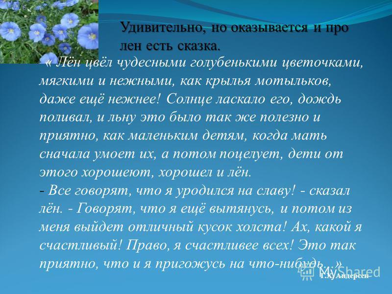Удивительно, но оказывается и про лен есть сказка. « Лён цвёл чудесными голубенькими цветочками, мягкими и нежными, как крылья мотыльков, даже ещё нежнее! Солнце ласкало его, дождь поливал, и льну это было так же полезно и приятно, как маленьким детя