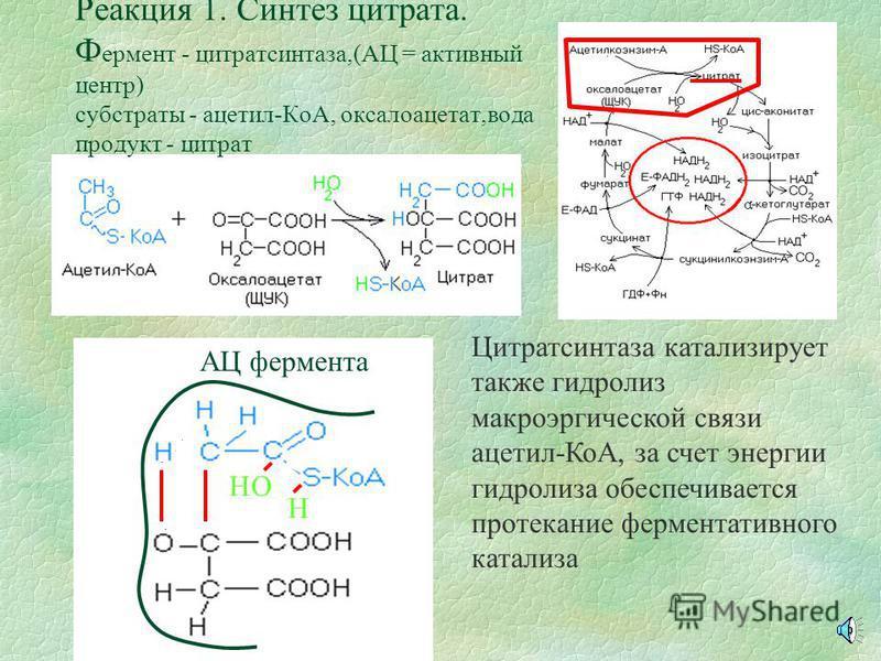 Понятие о ЦТК §Цикл Кребса представляет собой этап катаболизма углеводов, жиров и белков в аэробных условиях. В цикл вступает молекула ацетилкоэнзима-А, образуются молекула ГТФ, три молекулы НАДН и молекула ФАДН