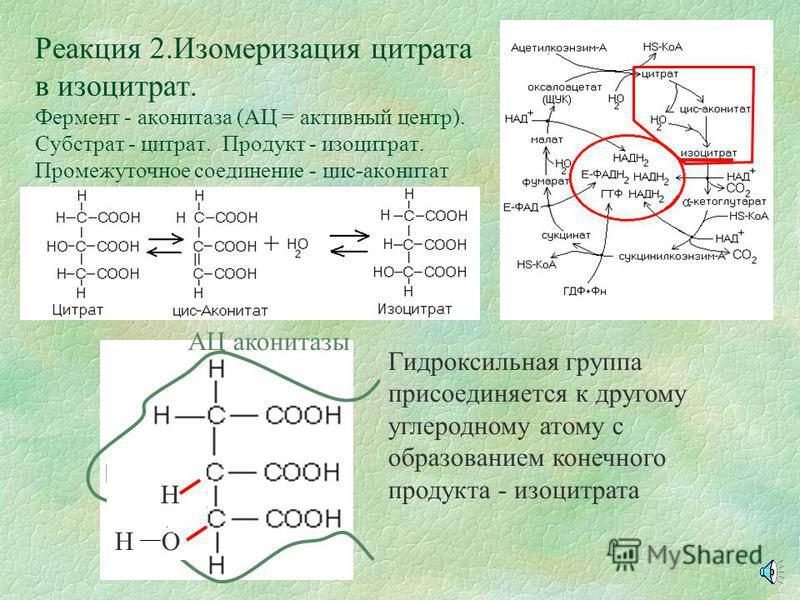 Реакция 1. Синтез цитрата. Ф ермент - цитратсинтаза,(АЦ = активный центр) субстраты - ацетил-КоА, оксалоацетат,вода продукт - цитрат АЦ фермента Активный центр фермента обладает сродством к молекулам оксалоацетата и ацетил-КоА и обеспечивает их опред