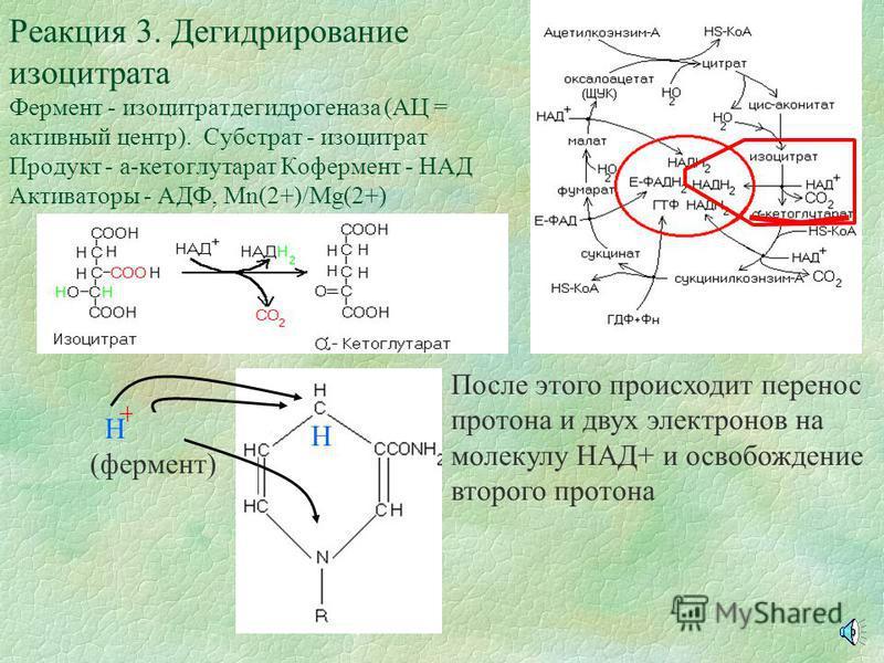 Реакция 2. Изомеризация цитрата в изоцитрат. Фермент - аконитаза (АЦ = активный центр). Субстрат - цитрат. Продукт - изоцитрат. Промежуточное соединение - цис-аконита АЦ аконитазы Н ОН Активный центр аконитазы, обладающий сродством к молекуле цитрата