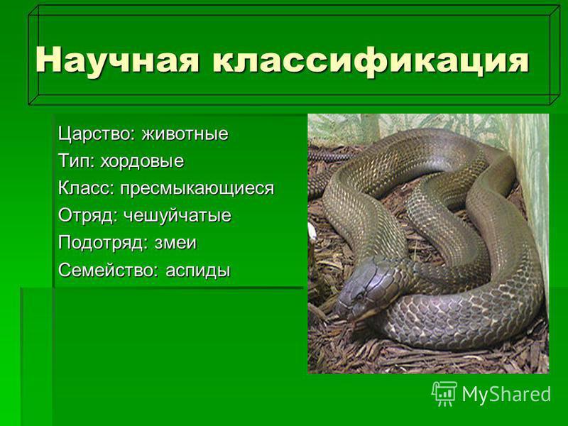 Научная классификация Царство: животные Тип: хордовые Класс: пресмыкающиеся Отряд: чешуйчатые Подотряд: змеи Семейство: аспиды