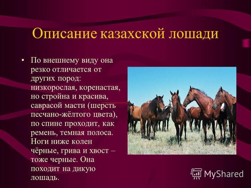 Казахская лошадь «Что сила лошадиная! Порой Твердят, что кони не для наших дней, И я не против скорости сверх звука, Но сверх того – за добрых лошадей».