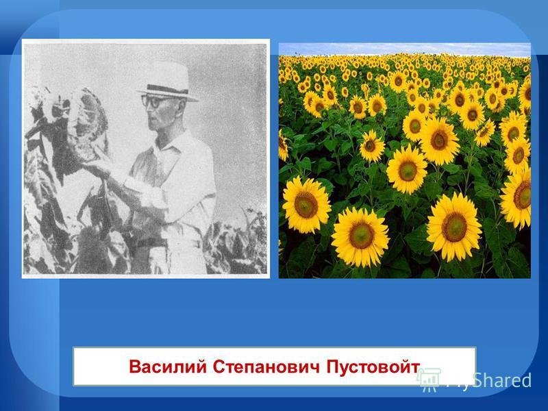 Василий Степанович Пустовойт