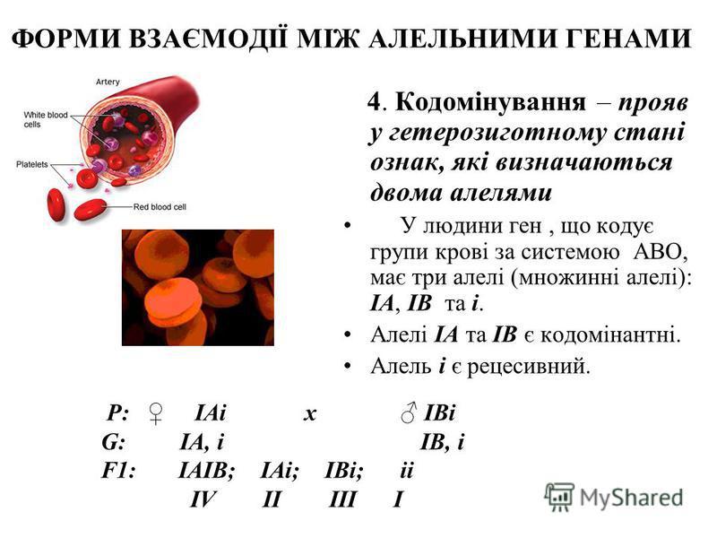 ФОРМИ ВЗАЄМОДІЇ МІЖ АЛЕЛЬНИМИ ГЕНАМИ 4. Кодомінування – прояв у гетерозиготному стані ознак, які визначаються двома алелями У людини ген, що кодує групи крові за системою ABO, має три алелі (множинні алелі): IA, IB та i. Алелі IA та IB є кодомінантні