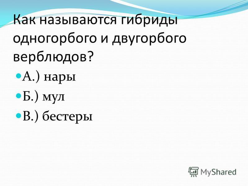 Как называются гибриды одногорбого и двугорбого верблюдов? А.) нары Б.) мул В.) блистеры