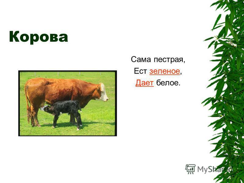 Корова Сама пестрая, Ест зеленое,зеленое Дает Дает белое.