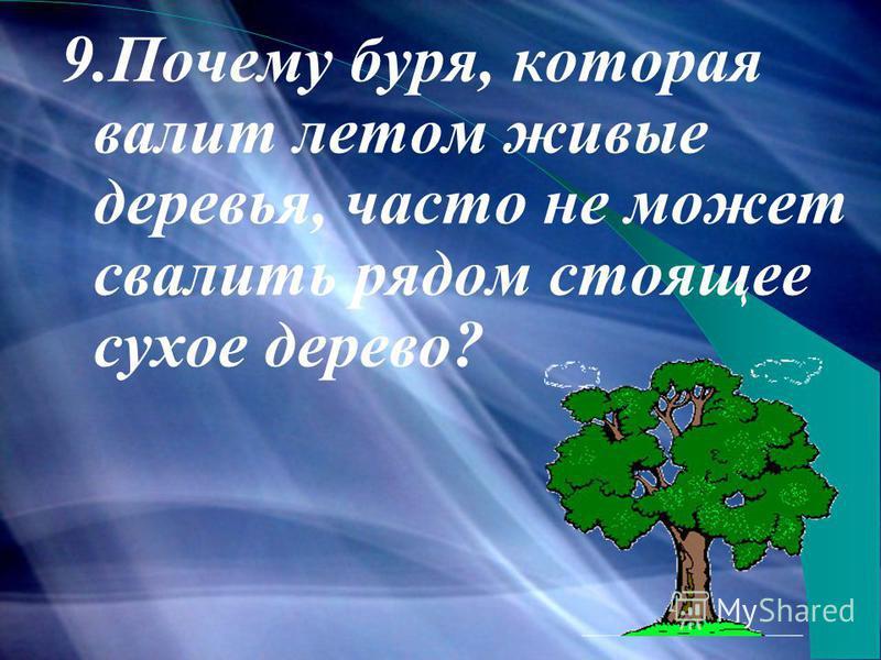 9. Почему буря, которая валит летом живые деревья, часто не может свалить рядом стоящее сухое дерево?