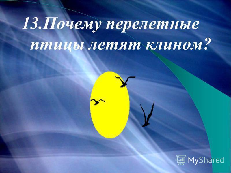 13. Почему перелетные птицы летят клином?