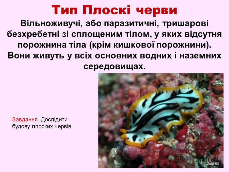 Тип Плоскі черви Вільноживучі, або паразитичні, тришарові безхребетні зі сплощеним тілом, у яких відсутня порожнина тіла (крім кишкової порожнини). Вони живуть у всіх основних водних і наземних середовищах. Завдання. Дослідити будову плоских червів.