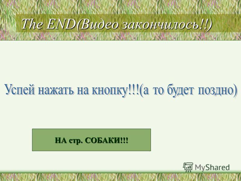 The END(Видео закончилось!!) НА стр. СОБАКИ!!! НА стр. СОБАКИ!!!