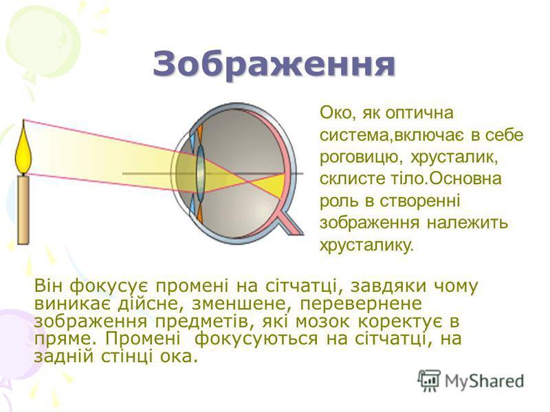 Зображення Він фокусує промені на сітчатці, завдяки чому виникає дійсне, зменшене, перевернене зображення предметів, які мозок коректує в пряме. Промені фокусуються на сітчатці, на задній стінці ока. Око, як оптична система,включає в себе роговицю, х