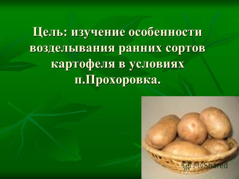 Цель: изучение особенности возделывания ранних сортов картофеля в условиях п.Прохоровка. Цель: изучение особенности возделывания ранних сортов картофеля в условиях п.Прохоровка.
