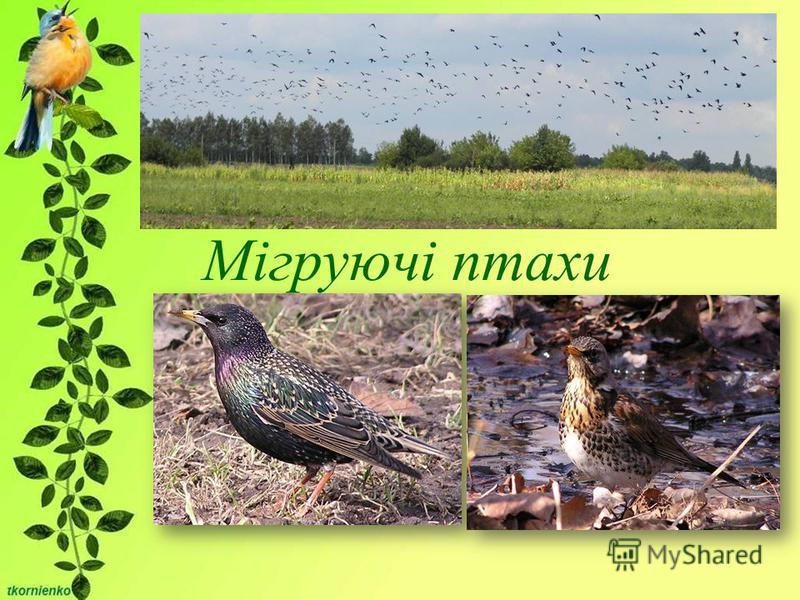 Мігруючі птахи