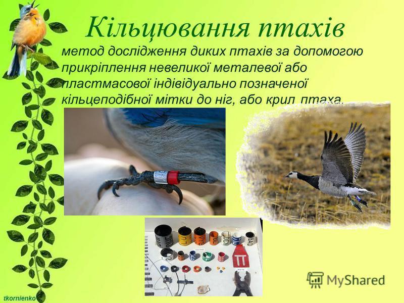 Кільцювання птахів метод дослідження диких птахів за допомогою прикріплення невеликої металевої або пластмасової індівідуально позначеної кільцеподібної мітки до ніг, або крил птаха.