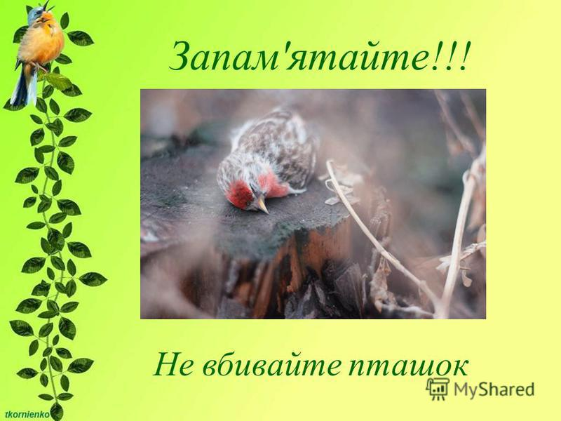 Запам'ятайте!!! Не вбивайте пташок