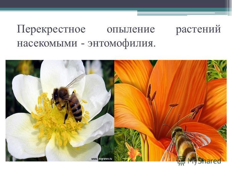 Перекрестное опыление растений насекомыми - энтомофилия.