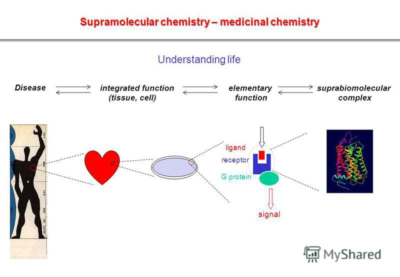 Disease Understanding life integrated function (tissue, cell) elementary function suprabiomolecular complex Supramolecular chemistry – medicinal chemistry receptor ligand G protein signal