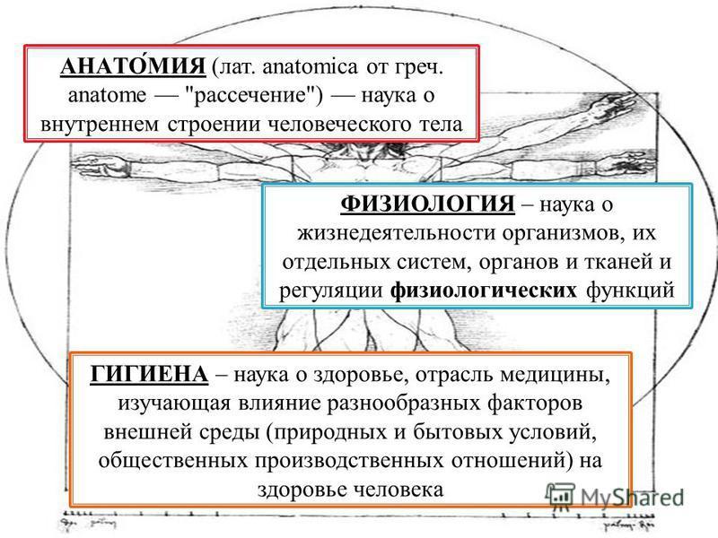 АНАТО́МИЯ (лат. anatomica от греч. anatome