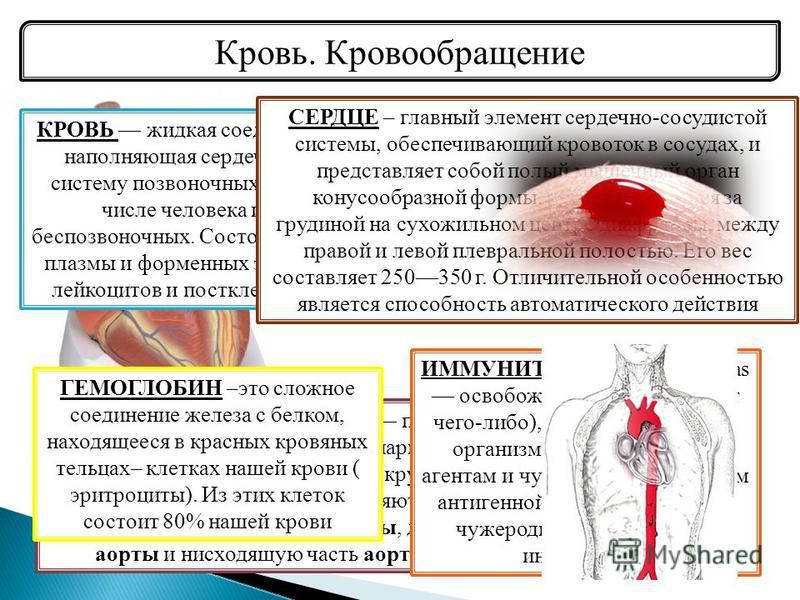 Кровь. Кровообращение АОРТА (лат..arteria ortha, a.ortha прямая артерия) самый большой непарный артериальный сосуд большого круга кровообращения. Аорту подразделяют на три отдела: восходящую часть аорты, дугу аорты и нисходящую часть аорты. КРОВЬ жид