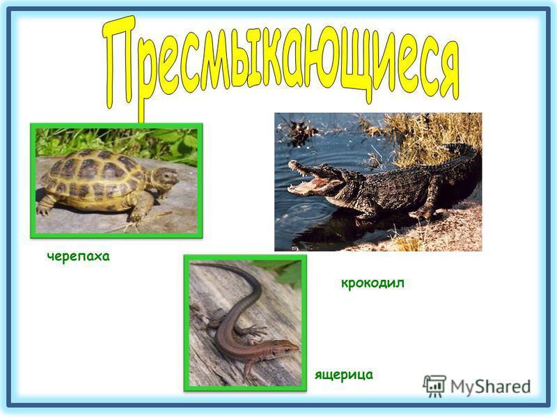 черепаха ящерица крокодил