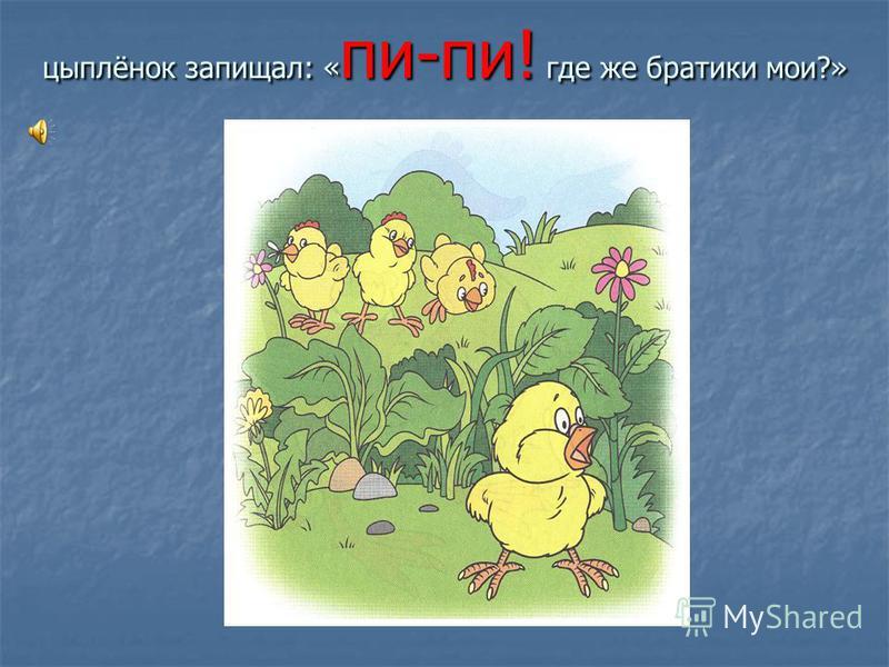 цыплёнок запищал: « пи-пи! где же братики мои?»