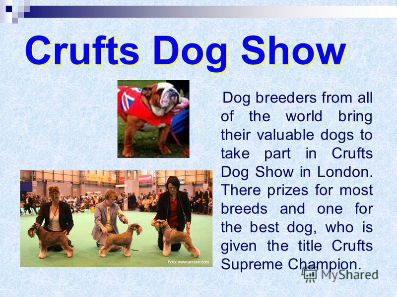 Crufts Dog Show Crufts Dog Show Dog breeders from all of the world bring their valuable dogs to take part in Crufts Dog Show in London. There prizes for most breeds and one for the best dog, who is given the title Crufts Supreme Champion.