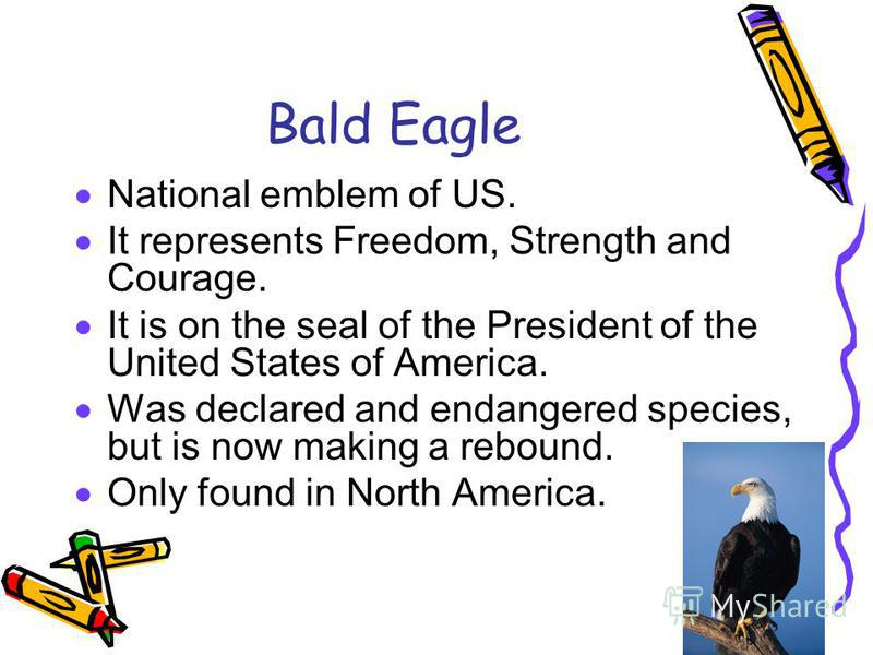 Bald Eagle National emblem of US. It represents Freedom, Strength and Courage. It is on the seal of the President of the United States of America. Was declared and endangered species, but is now making a rebound. Only found in North America.